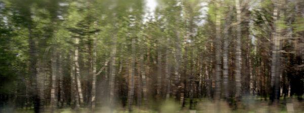 Photographie extraite du livre Une si lente absence