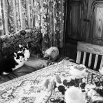 1er prix du jury ©Mascha Joustra, Farmer wout | afternoon sleep